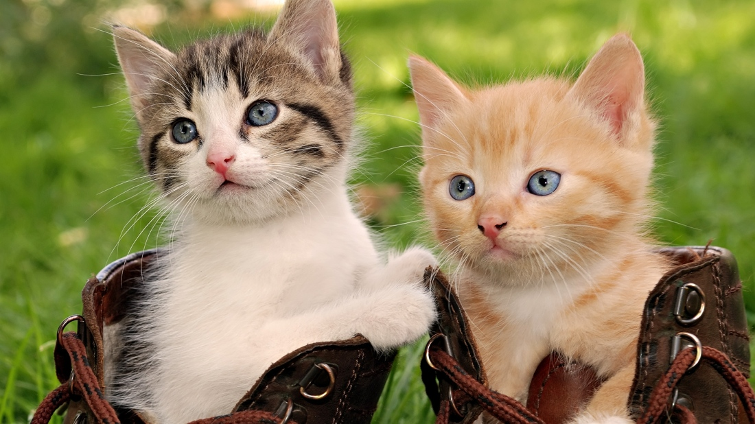 Cute-cats-wallpaper-hd
