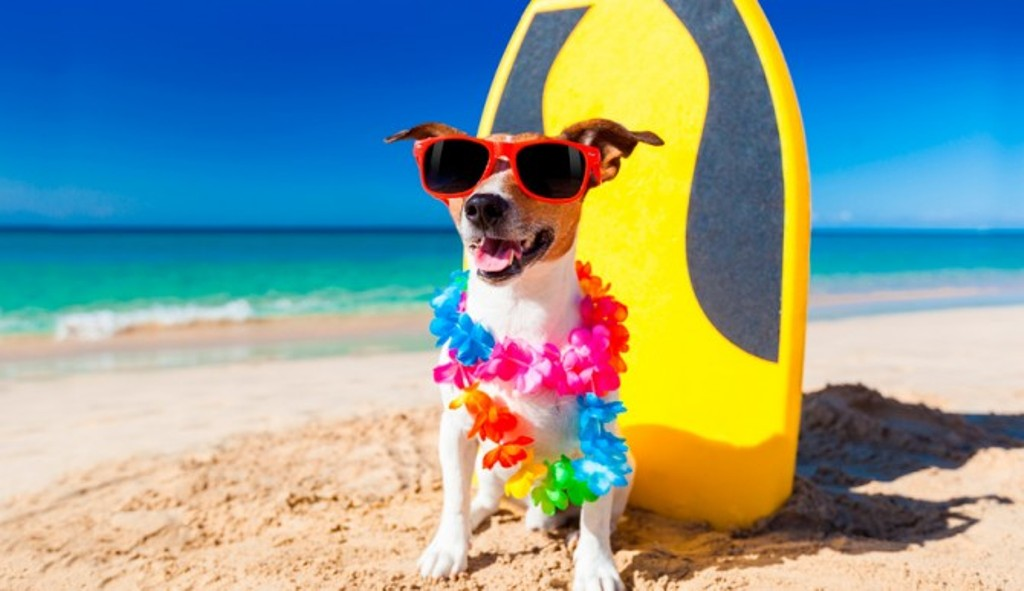 dog-beach-670x387