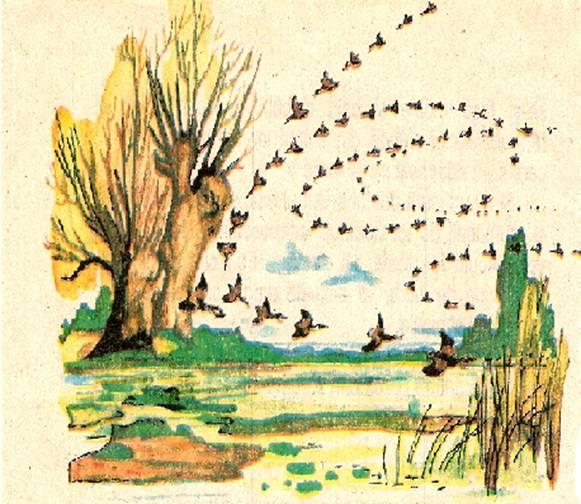 doua randunele poveste de aurelia oanca