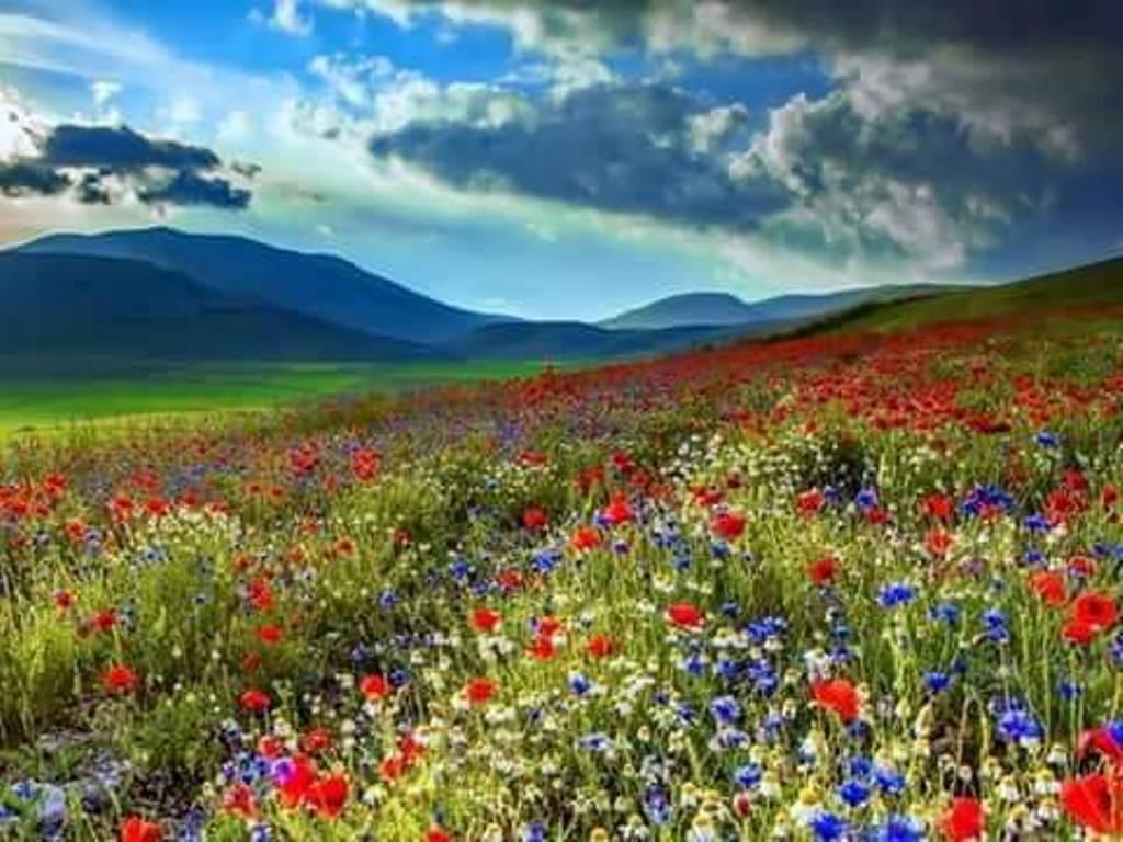 flori alese de teodora dumitru