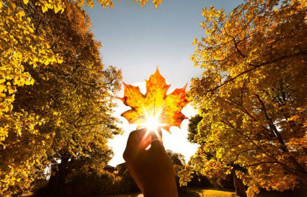 frunze in toamna de ionescu gabriel