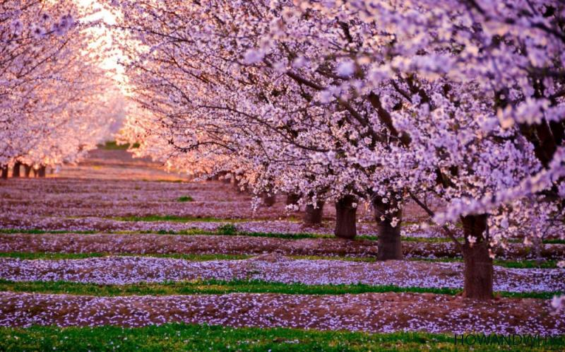 magia florilor de cires de mihaela cd