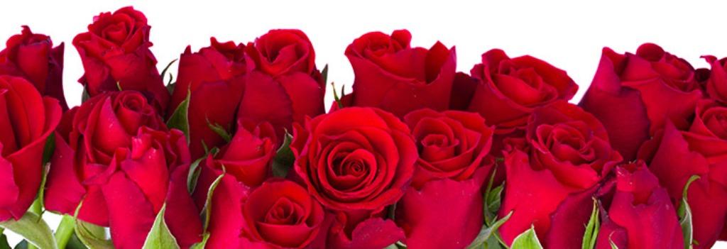 semnificatia_buchetului_de_trandafiri
