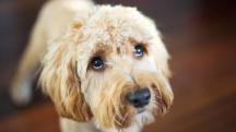 wbz-dog-shiver-trembling-causes