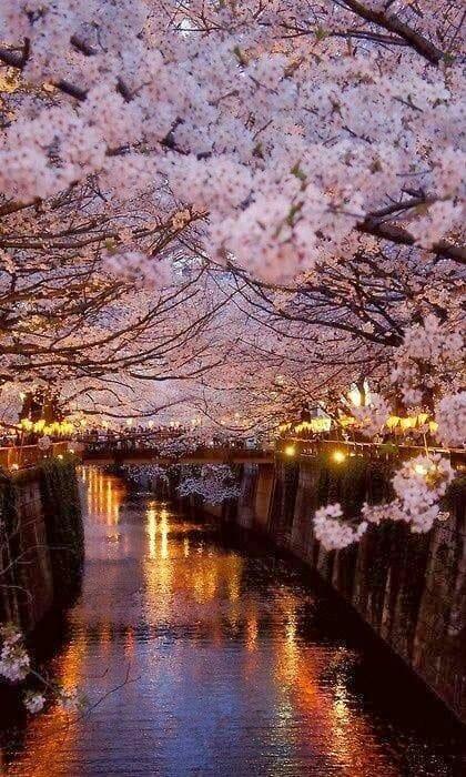 Flori din pomul vietii de Mihaela CD