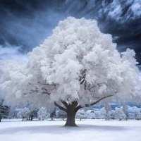 Iarna din sufletul meu ...