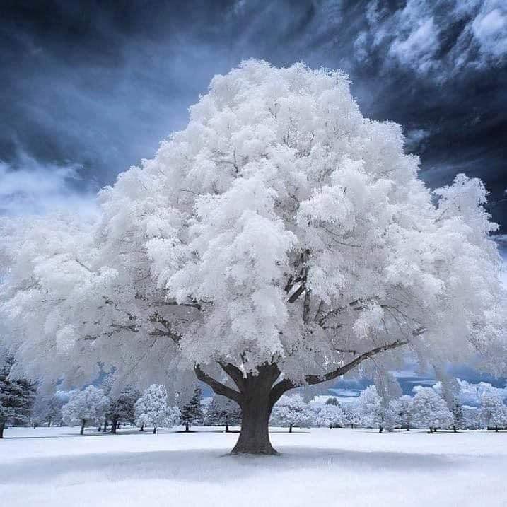 Iarna din sufletul meu de Mihaela CD