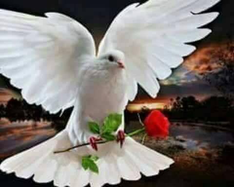un porumbel de aurelia oanca