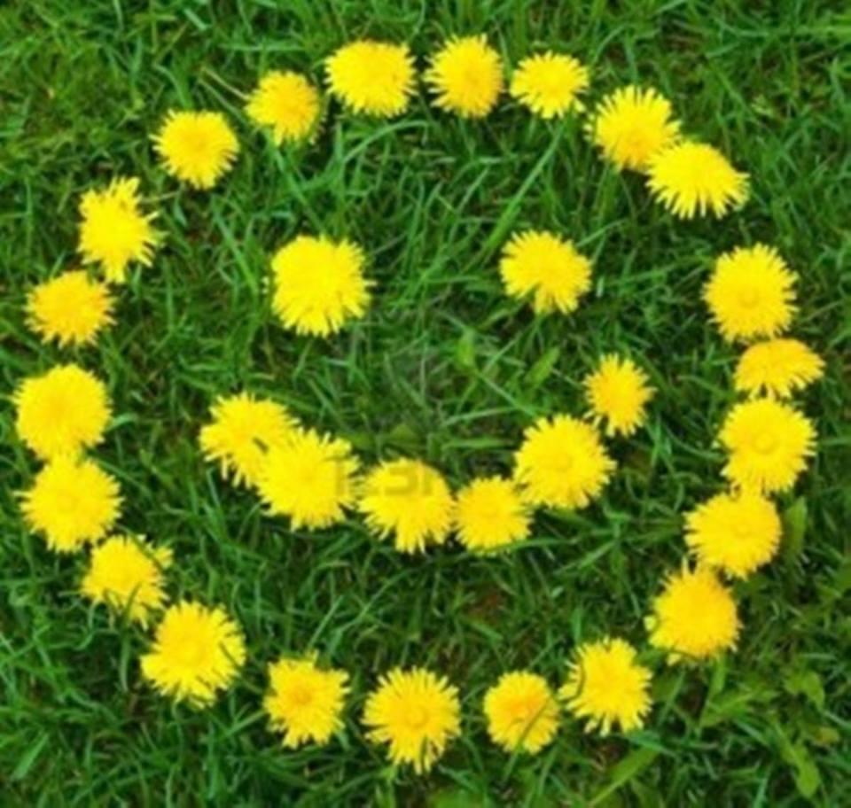 flori de papadie de teodora dumitru