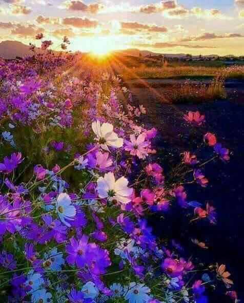 sa nu lasi florile sa moara de elena tudosa