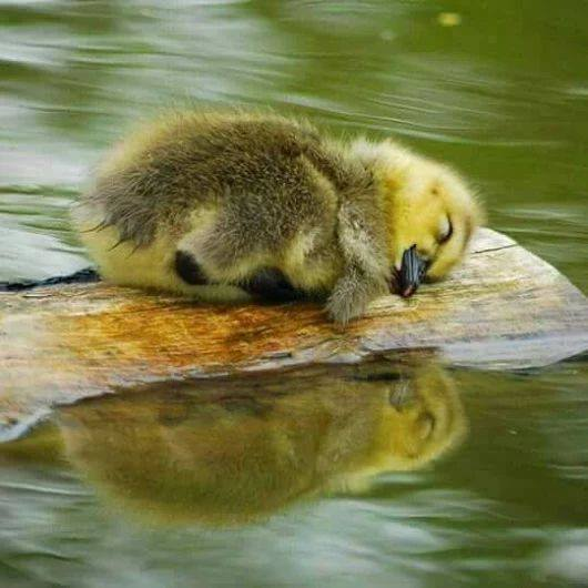 somnul dulce de aurelia oanca