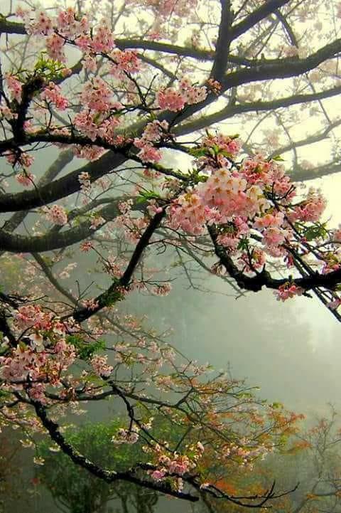 splendid paradis de aurelia oanca