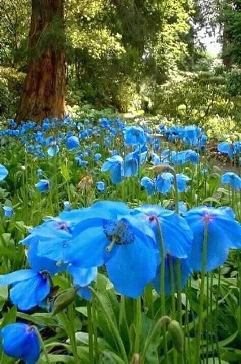 albastru sublim de aurelia oanca