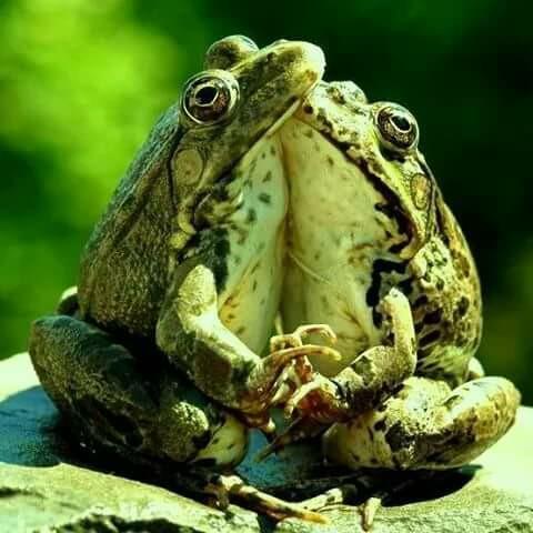 o broscuta si-un brotac de loreta toader