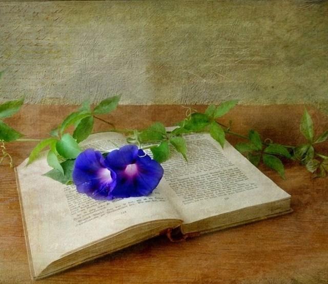 Credinta poetului de Gabriel Ionescu