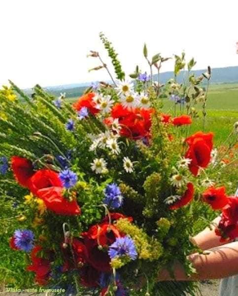 flori de camp de teodora dumitru