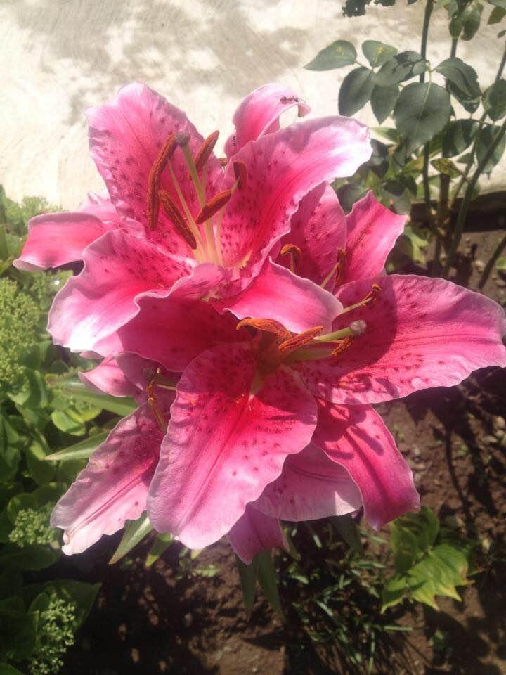 florile dorului meu de elena tudosa