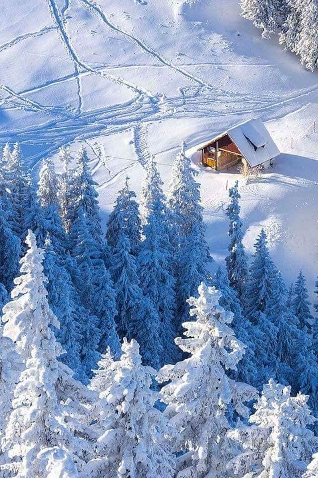 iarna in padure de marilena dumitrescu