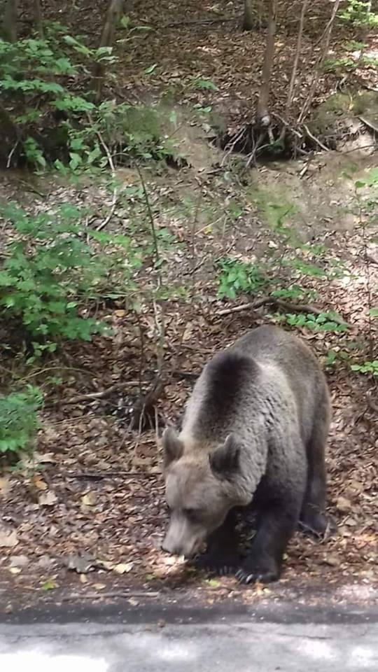 m-am intalnit cu ursul de sandu chiva