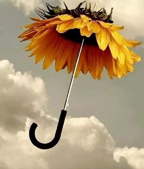 umbrele pentru suflet de teodora dumitru