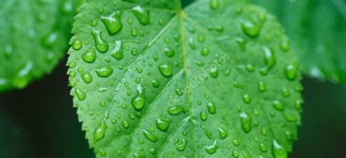 frunza verde de teodora dumitru