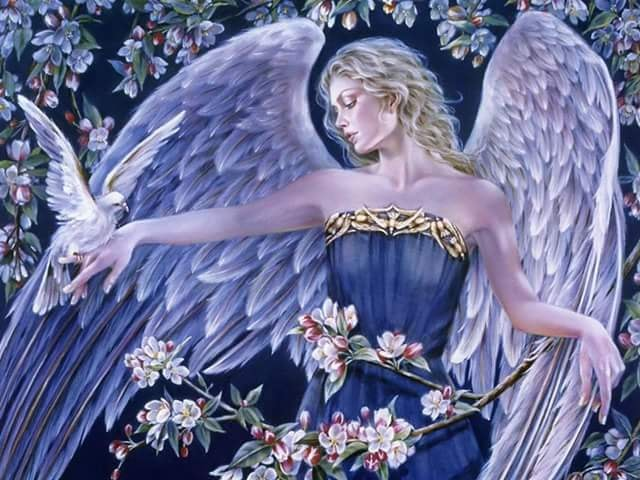 noapte buna paradis de elena tudosa