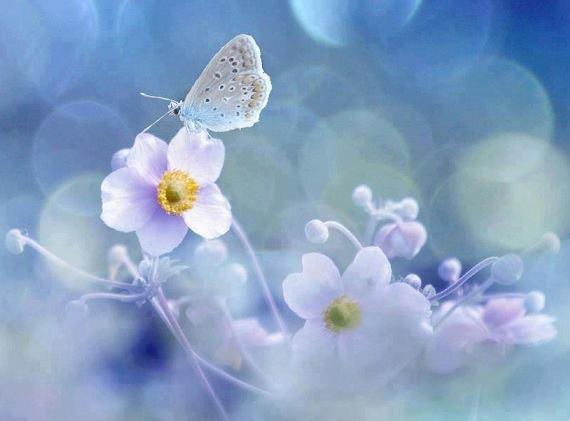 sonetul florilor de mai de daniel visan d