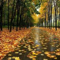 Cantecul frunzelor
