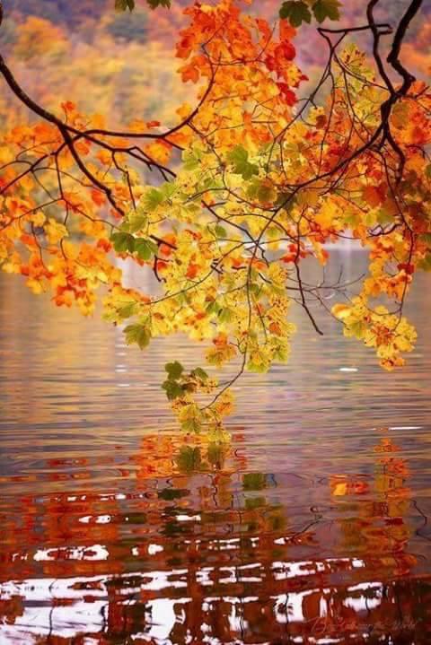 cand vei veni octombrie de aurelia oanca