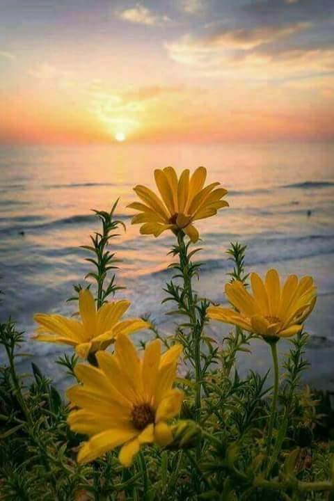 frumusetea naturii de aurelia oanca