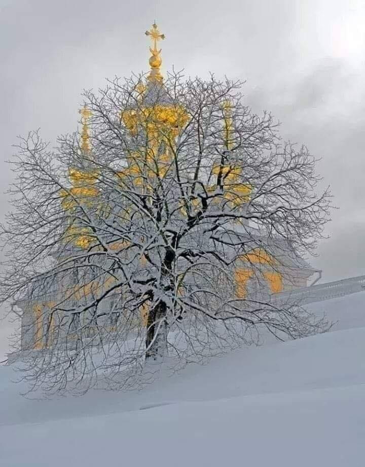 din copacul vietii de teodora dumitru