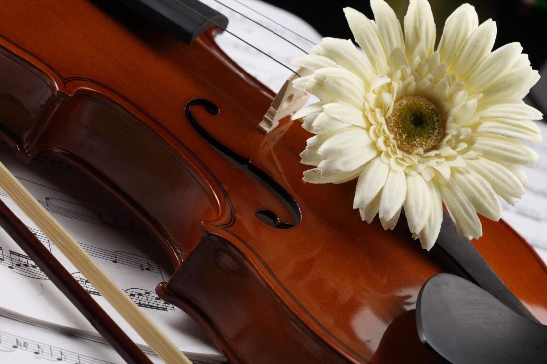 beautiful-violin-wallpaper-5