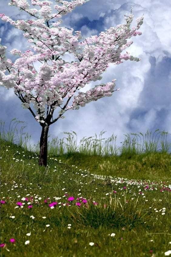 copacul meu de aurelia oanca