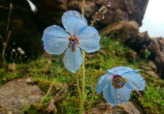Flori de cer