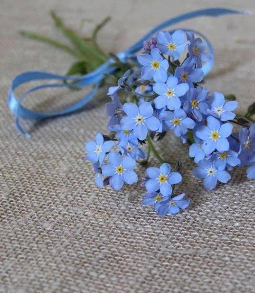 florile din glastre de aurelia o