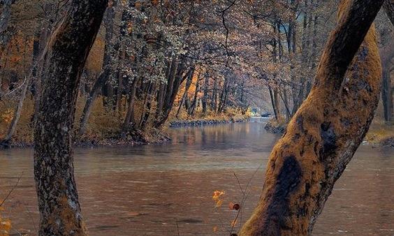 Iubirea din umbra pădurii