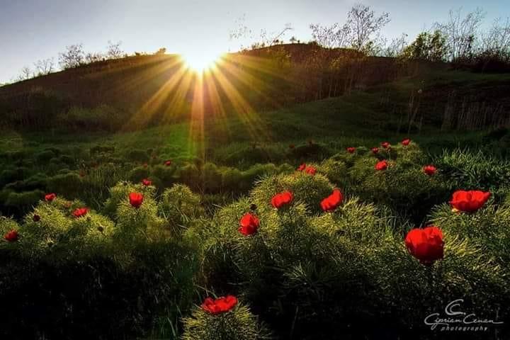 al diminetii vals de aurelia oanca