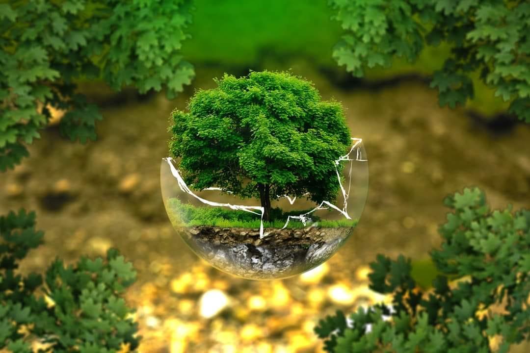 copacul de constantin bidulescu