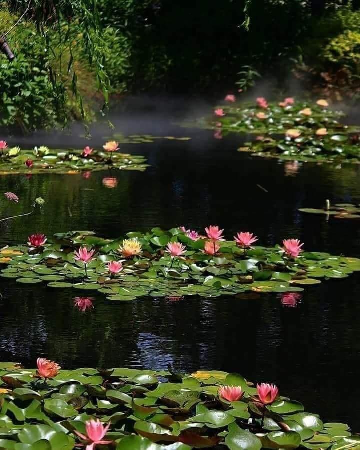 cantecul deltei de aurelia oanca