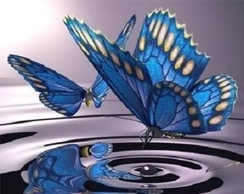 lacrimile fluturilor albastri de dvd