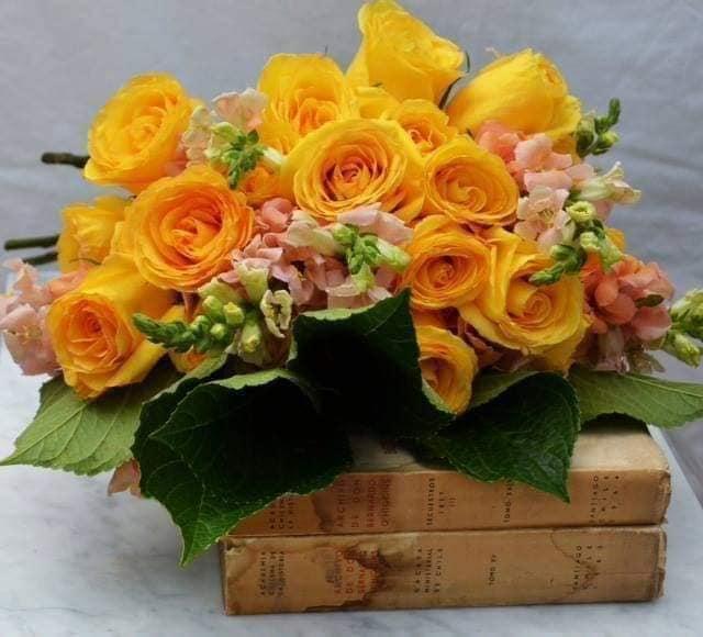 trandafirul meu galben de mari lena stefan